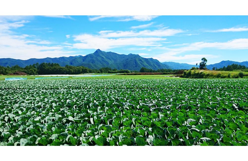 全国農業協同組合連合会 長野県本部(JA全農長野)